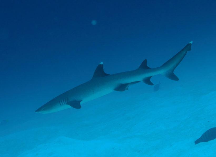 Mirihi Ocean Pro Diving Tauchimpressionen