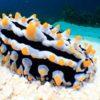 Mirihi Ocean Pro Diving tauchimpressionen schwarz weiß gelb