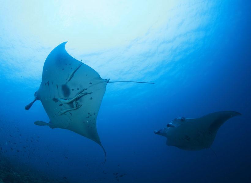 Mirihi Ocean Pro Diving Rochen von unten